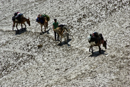 our mules crossing with our utensils and ration